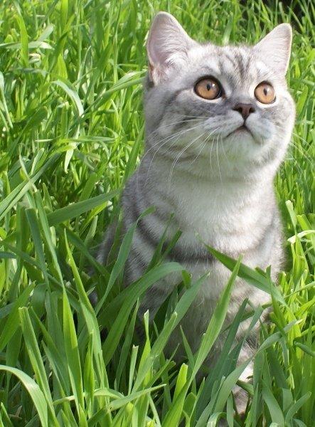 http://camelia-cats.narod.ru/afr5.jpg