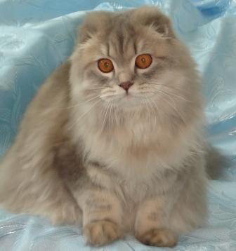 http://camelia-cats.narod.ru/mila7.jpg
