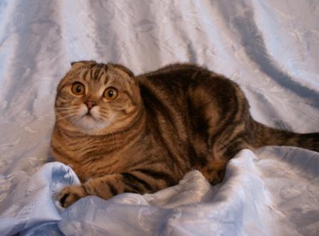 http://camelia-cats.narod.ru/nika6.jpg