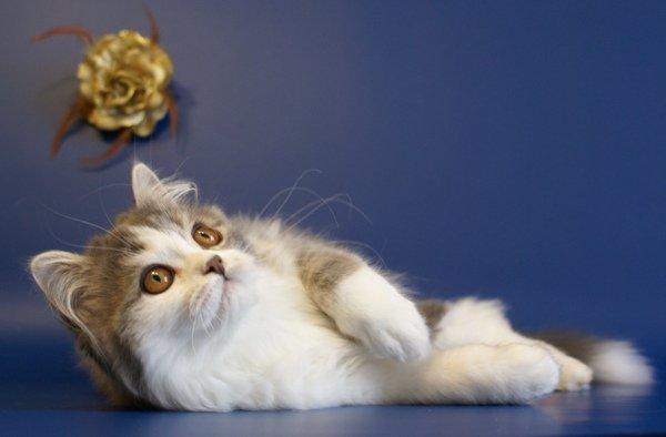 http://camelia-cats.narod.ru/zyn4.JPG